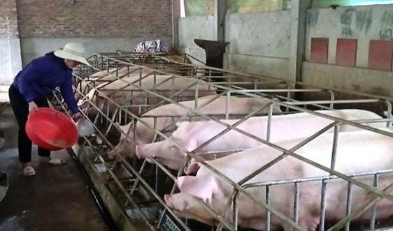 Đề nghị ưu tiên cho người chăn nuôi được vay vốn tái đàn